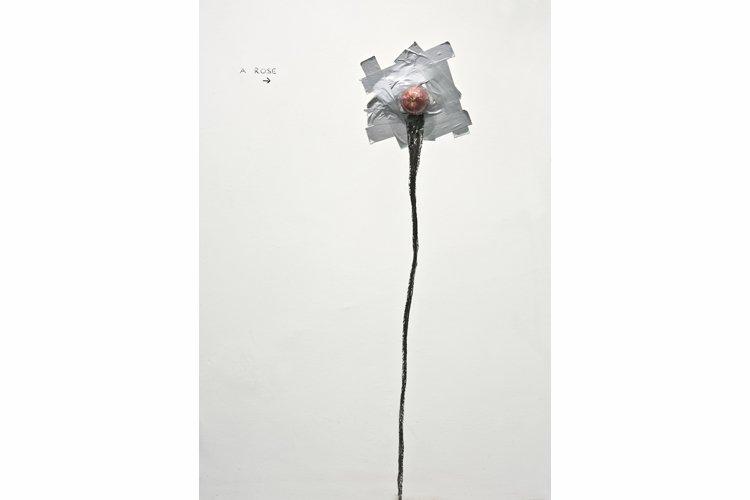 A rose web